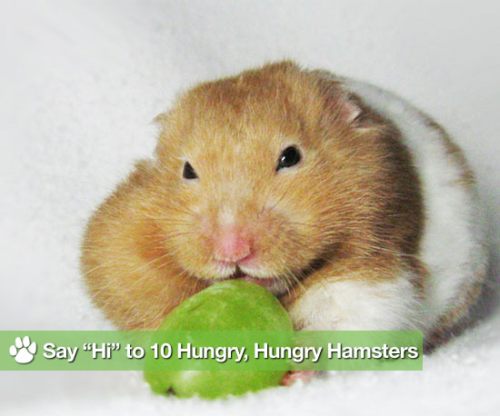 "Say ""Hi"" to 10 Hungry, Hungry Hamsters"