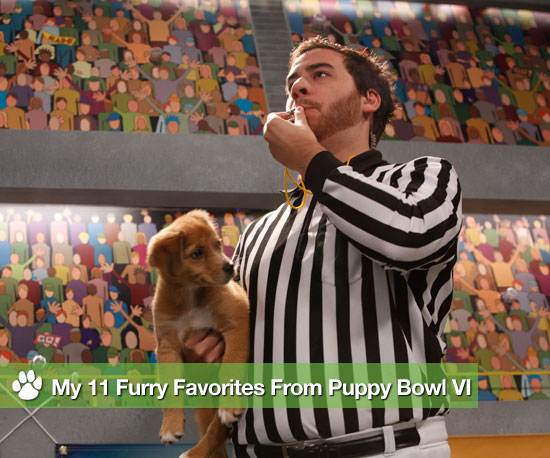 My 11 Furry Favorites From Puppy Bowl VI