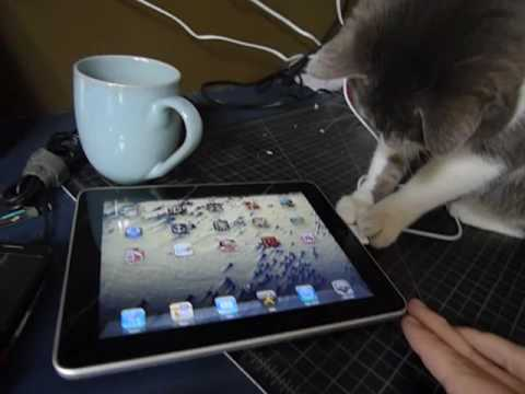 Sunday Funday Video: Pets Get Their Paws on the iPad
