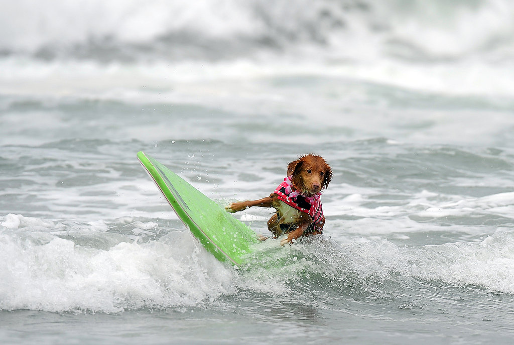 Rolling on the Waves