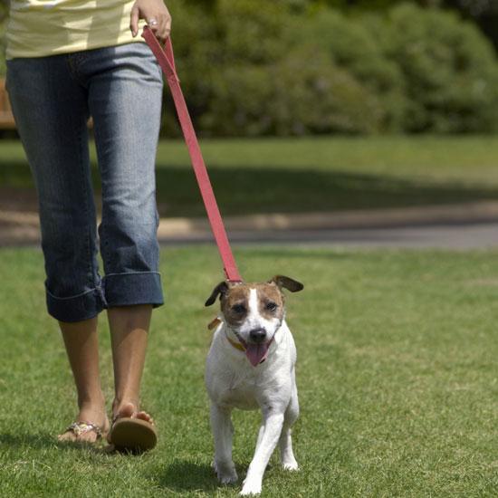 How Often Should I Walk My Dog
