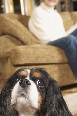 What Should I Ask Petsitters?