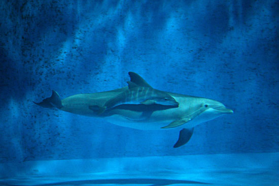 It Takes a Village to Name a Dolphin