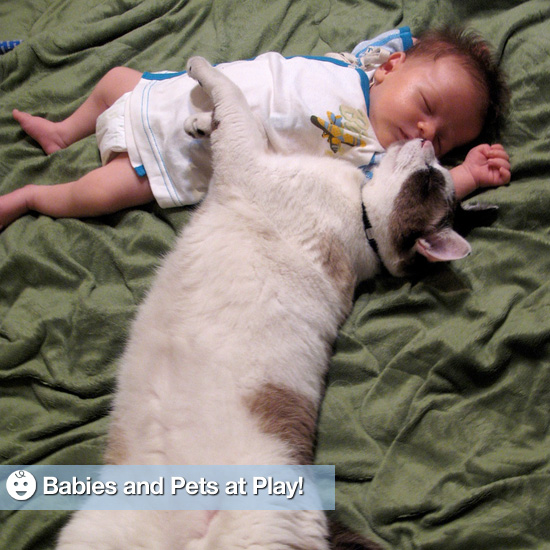 Pictures of Babies Playing With Pets