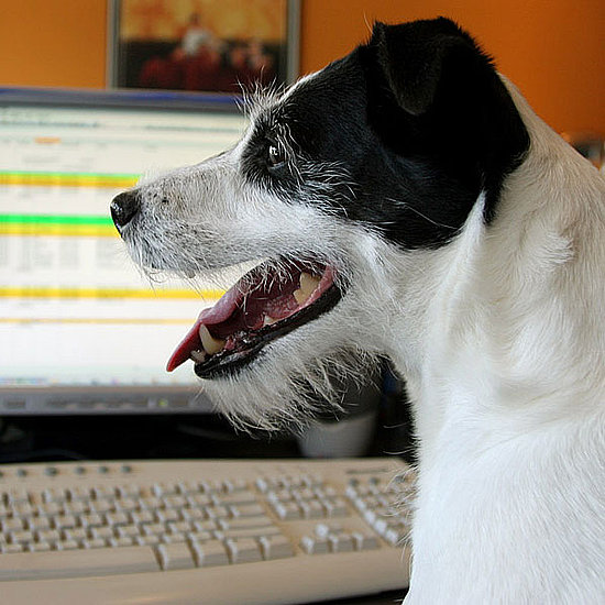 Dogs at the Office Pictures