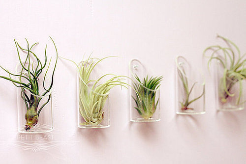 Medium Air Plant and Glass Vase // Wedding Favor by PetitBeast