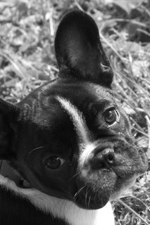 Pet Pic of the Day: Oui, Oui!