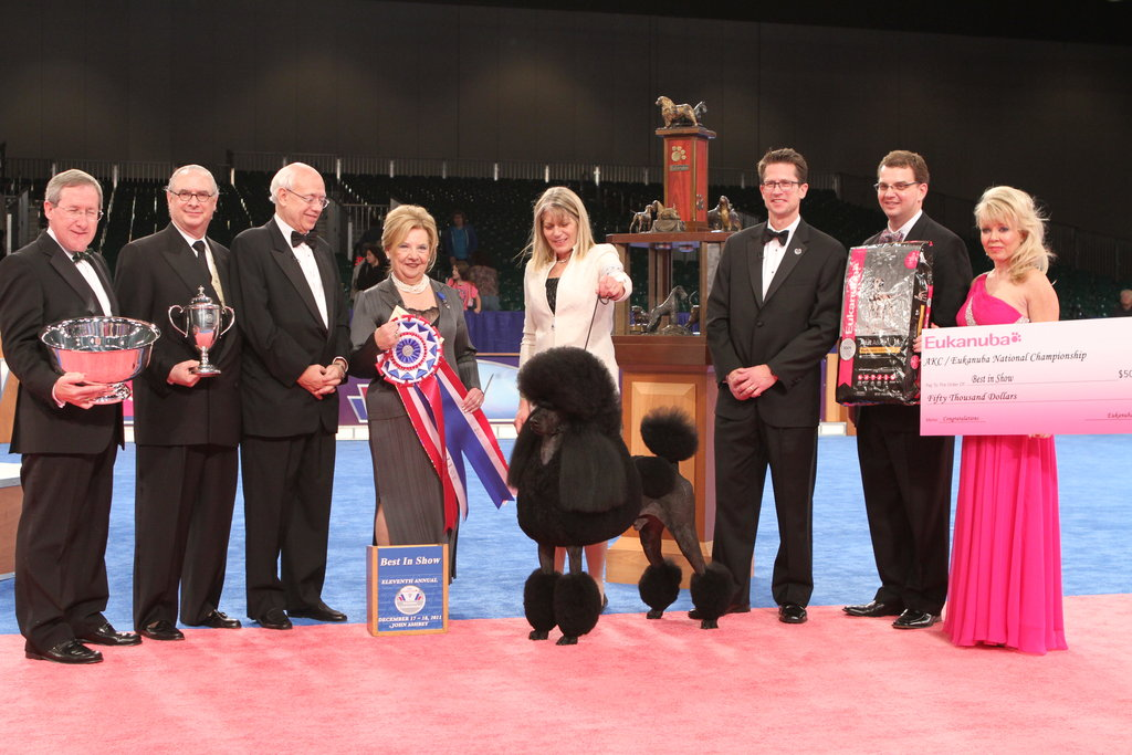 London soaks up his Best in Show win. Source: AKC/Robert Young