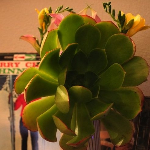 Succulents in Christmas Bouquets