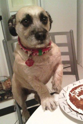 Pet Pic of the Day: Birthday Cookie