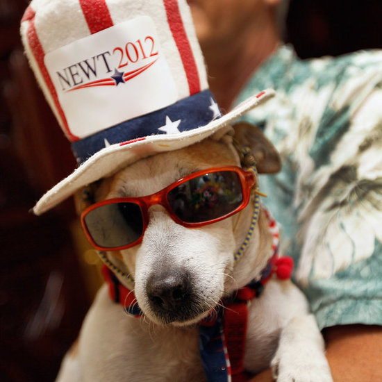 Dogs Supporting Super Tuesday Candidates Pictures