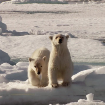 Frozen Planet on DVD and Blu-ray