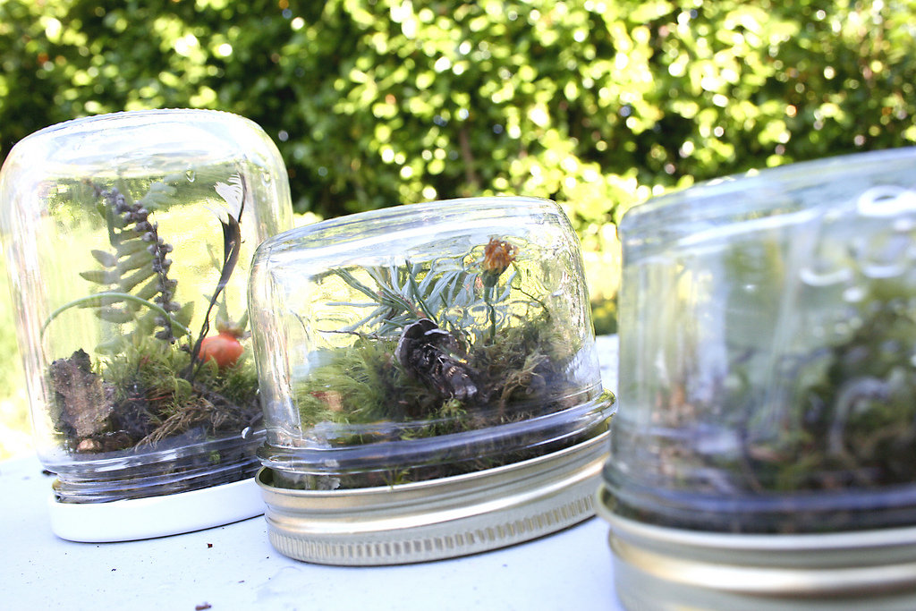 Terrariums 20 things to do with all those leftover glass for Jardin glass jars