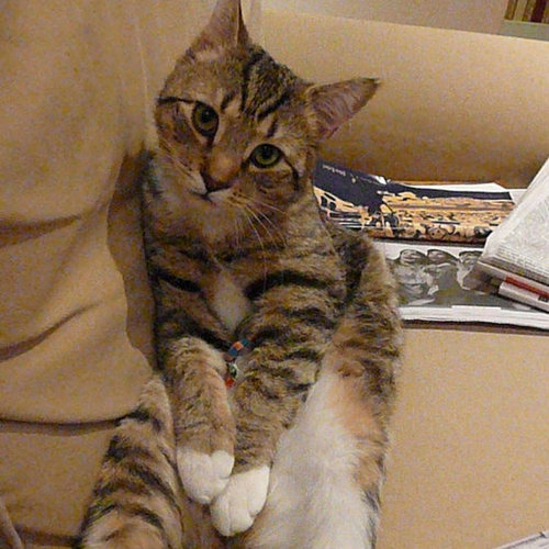 America's Next Top Cat Model