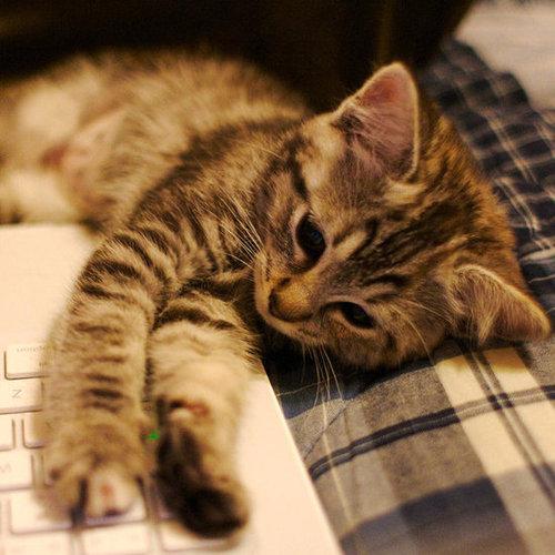 Cozy Cat Antics