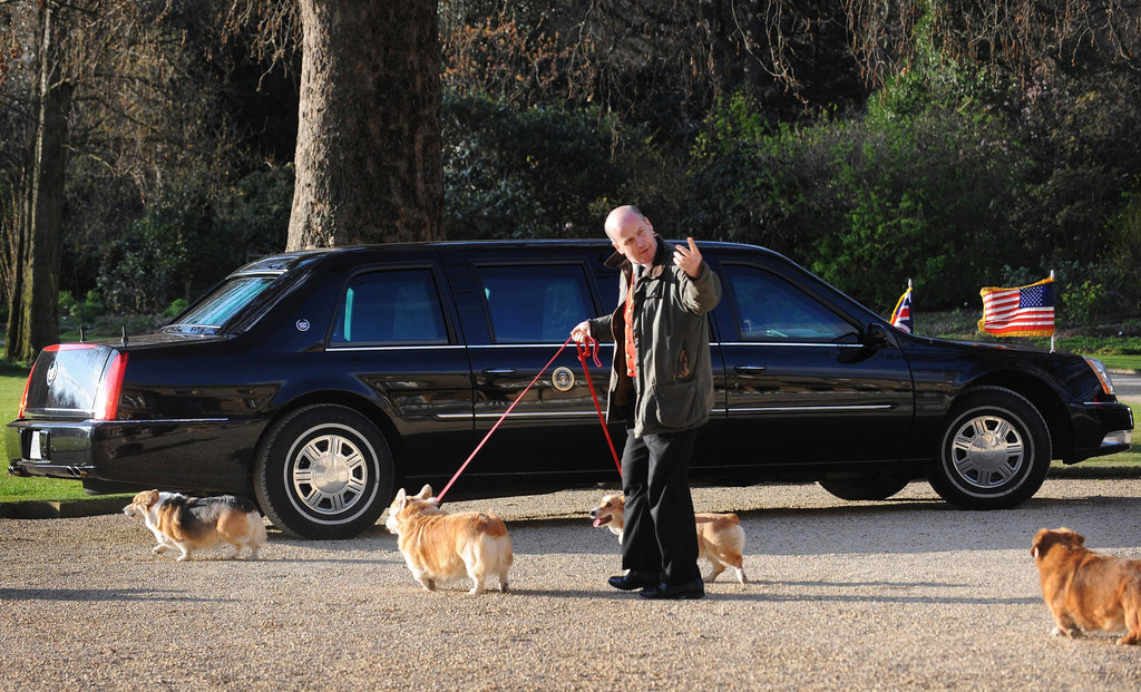 The Corgis checked out President Obama's state car while he was in London to meet with the queen in 2009.