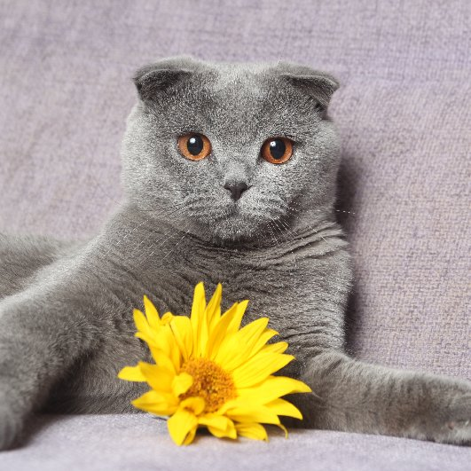 Which Fall Flowers Are Poisonous to Pets?