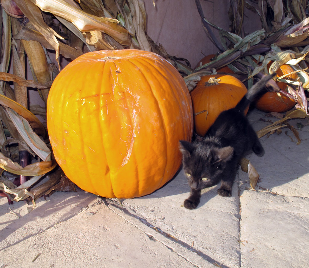 A stroll, a pumpkin companion (or two), and sunshine equal a great day out! Source: Flickr user Robert Couse-Baker
