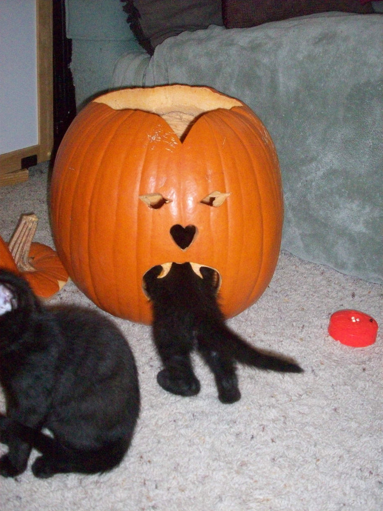 A carved pumpkins can bring out the explorer in all of us . . . Source: Flickr user AlishaV