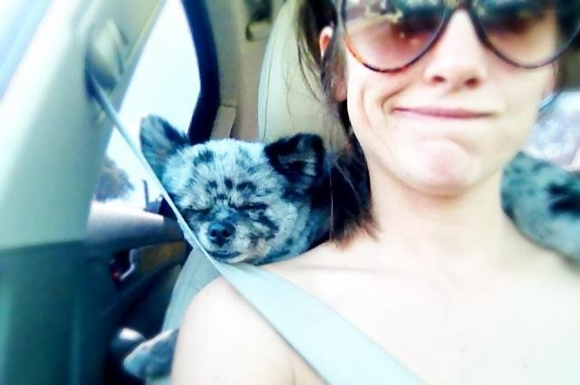 Jessica Stroup took a car ride with her dog. Source: Twitter user JessicaLStroup