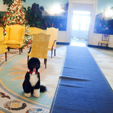 Bo Obama Shares White House Decorations 2012