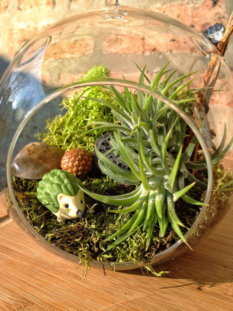 Hedgehog and Air-Plant Terrarium