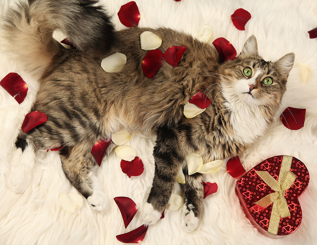 Cute Valentine Animals Share This Link