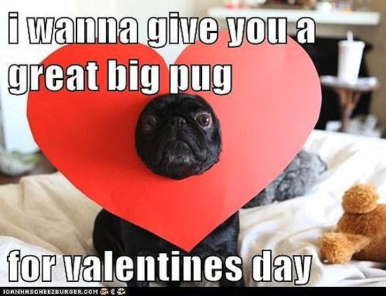 Beautiful Ugly Dog Valentines Day Memes Selection