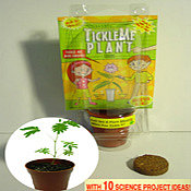 TickleMe Plant  - Birthday Party Gardening Gifts for Nature lovers