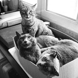 Cats in Cardboard Boxes