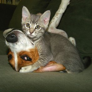 Interspecies Friendships | Pictures