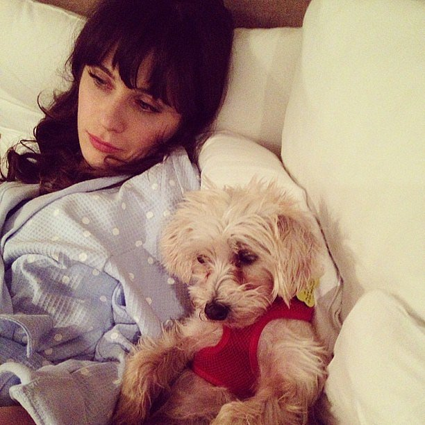 Zooey Deschanel shared this sweet snap while relaxing with her pup. Source: Instagram user zooeydeschanel