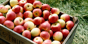 Fruity Ways to Fill Up on Fibre