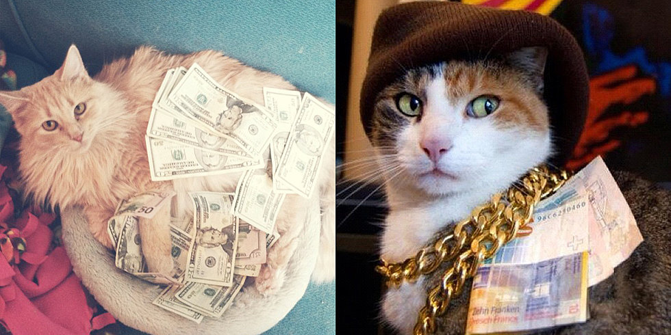 Cats Rolling in Money Pictures of Cats With Money