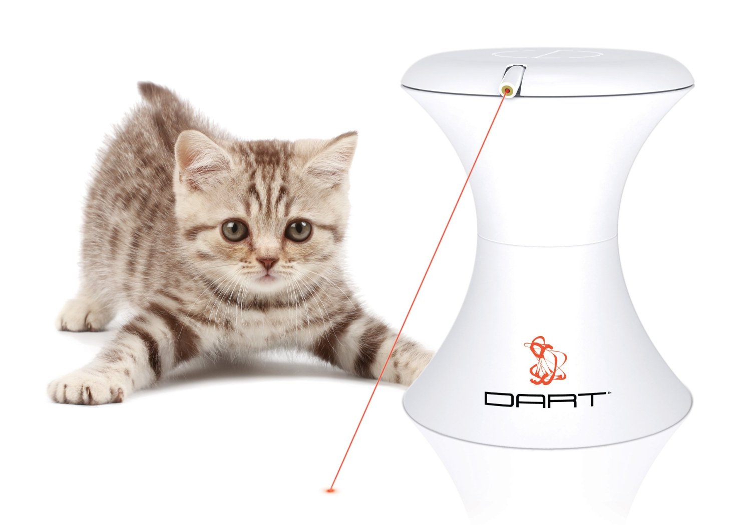 Silly Kitty  Keep Pets Cool With August's Must Haves  POPSUGAR Pets