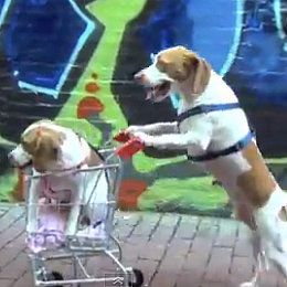 Dogs and a Shopping Cart I Video