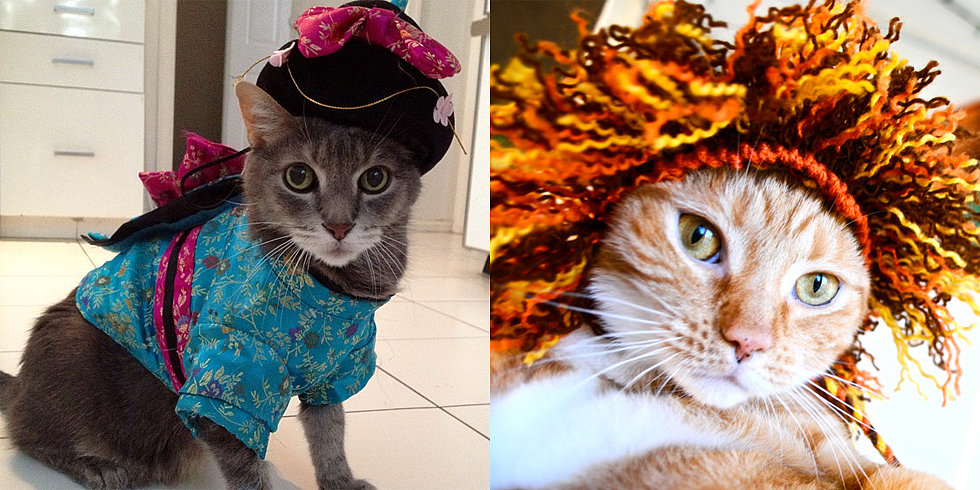 Cats Join the Meow-loween Costume Fun!