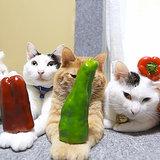 Cats Balancing Food | Video