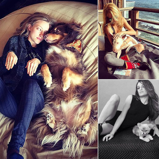 New Celebrity Pups and Wild Encounters in October