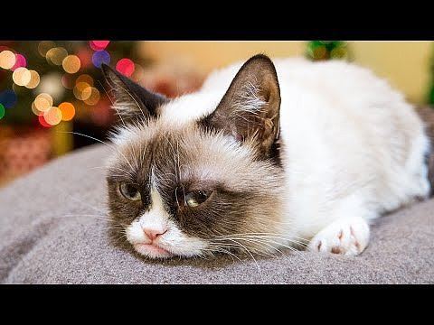 It's Hard to Be a Cat at Christmas I Video
