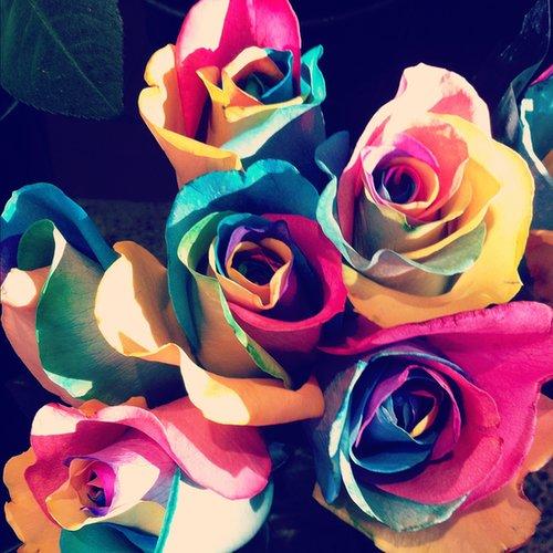 Make a Rainbow Rose
