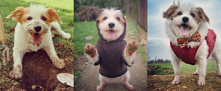 Meet Instagram's Happiest Dog: Ginny!
