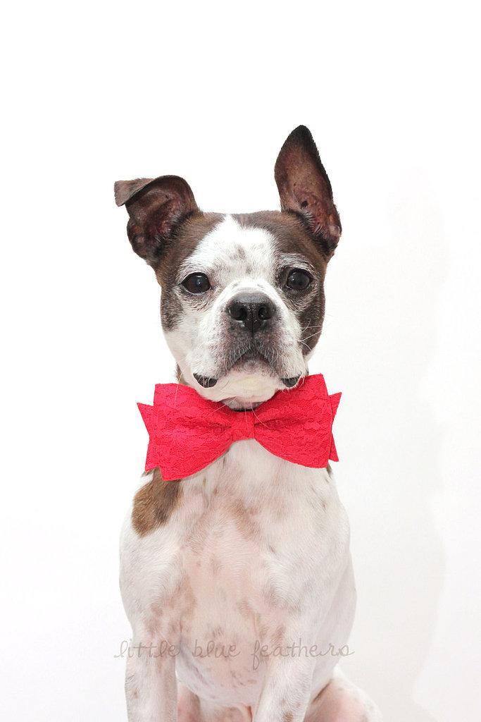Dapper Doggie