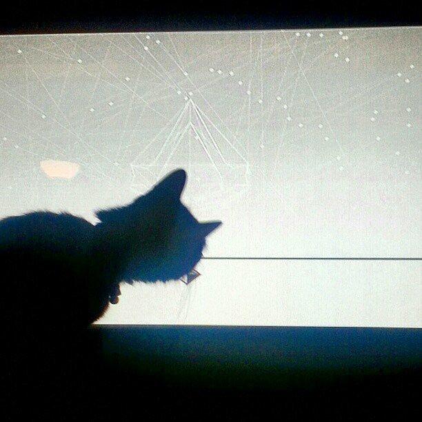 """""""They call me the curious cat.""""  Source: Instagram user violentindigo"""