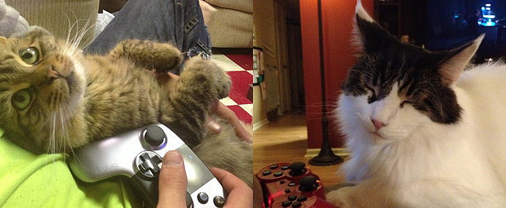 Beware: Cats Playing Video Games Are Too Good For Words