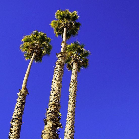Palm Trees Picture