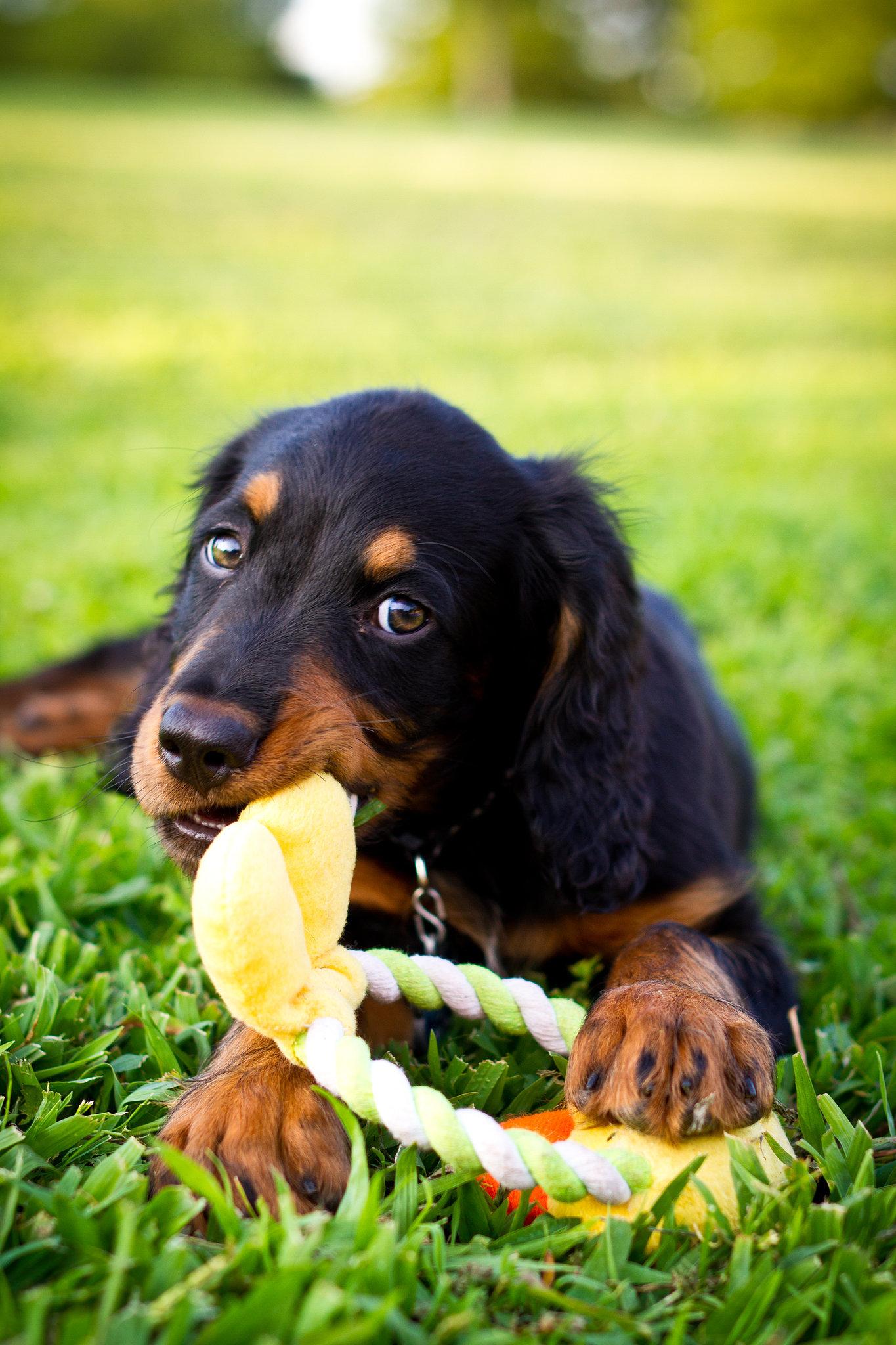 6. Chew Toys