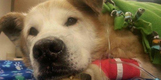 Boomer The Dog Rescued From Washington Mudslide