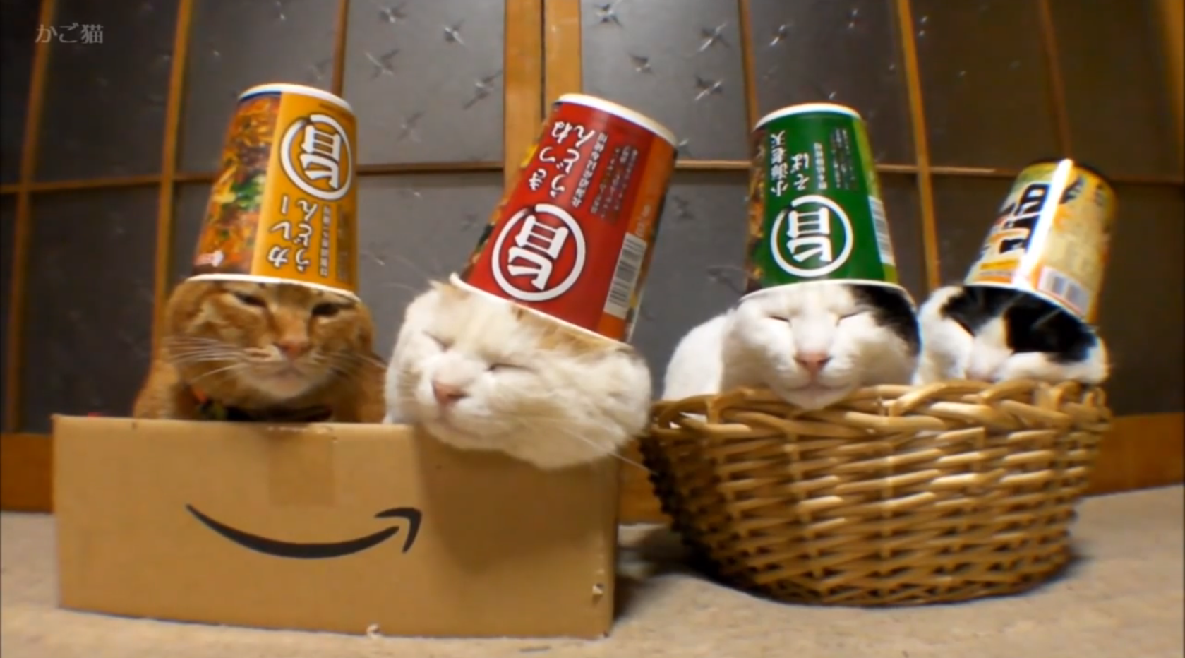 Cats With Ramen-Cup Hats