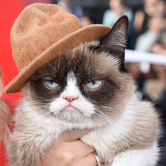 Grumpy Cat at the 2014 MTV Movie Awards
